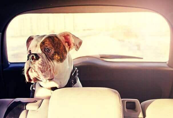 Dog Boarding Sydney