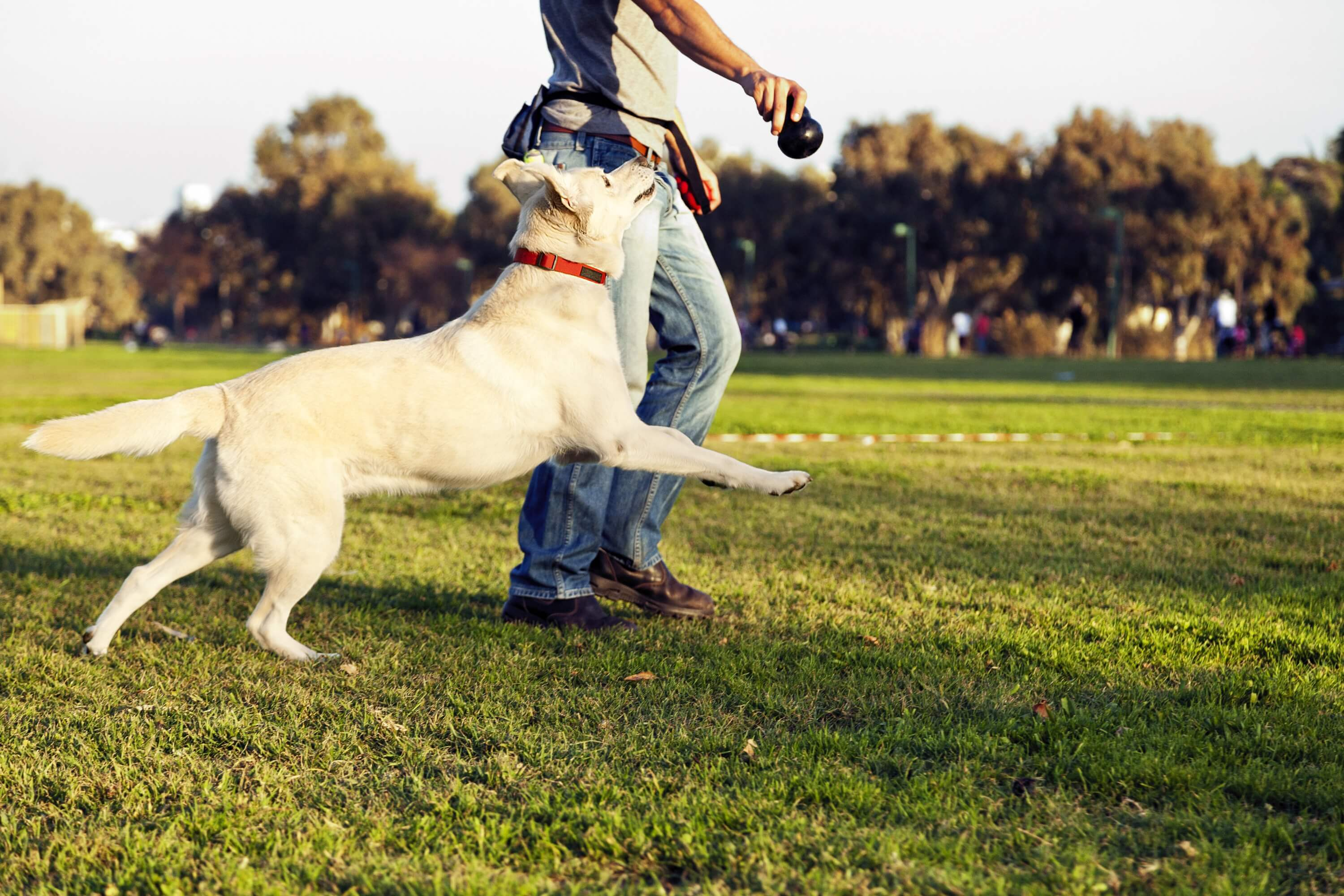 Keep Your Dog Fit