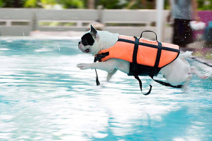 Teach Your Dog To Swim