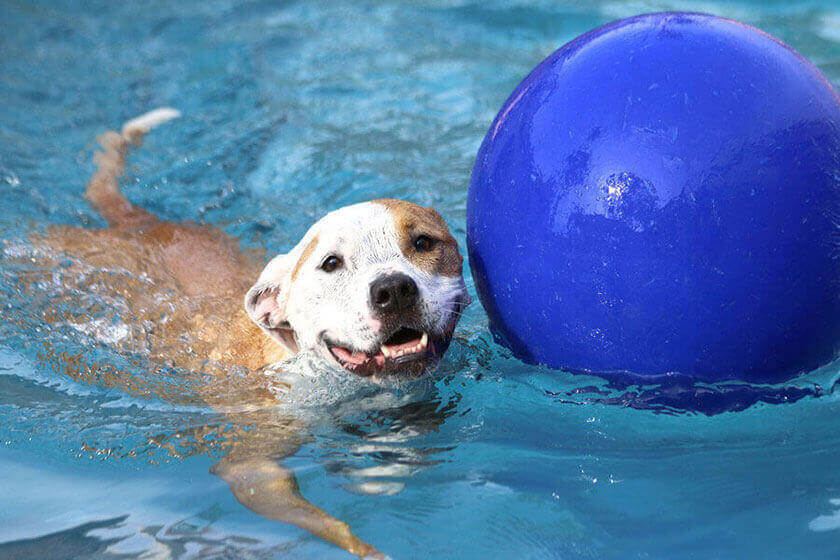 Water Safety Tips For Your Dog
