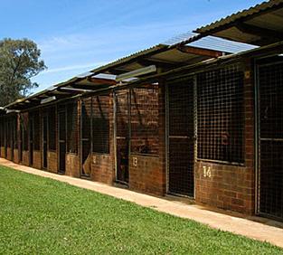Dog Training Sydney kennels
