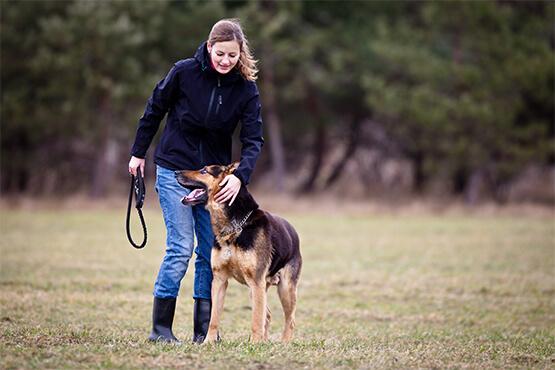 dog_boarding_sydney