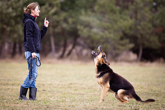 Dog Training in Sydney