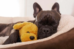 Choosing The Best Dog Bed