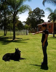 Dog Training Sheppard