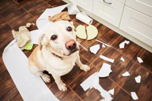 Destructive Behaviour In Dogs