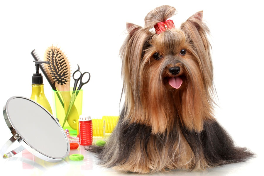 Pet Grooming Supplies