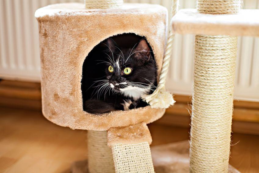 Indoor Cat Entertained