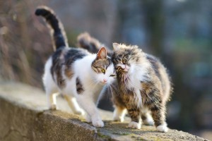 Your Cat's Behaviour