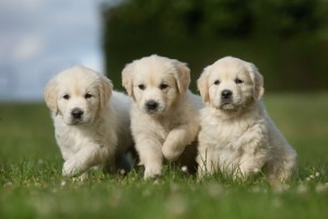 What Dog Breed Is Best For You