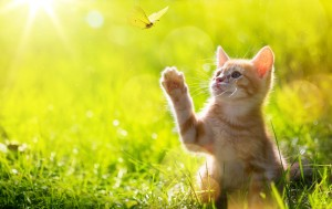 Fun Facts About Cats