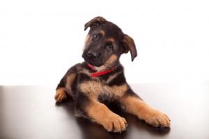 Pet's Hearing Loss