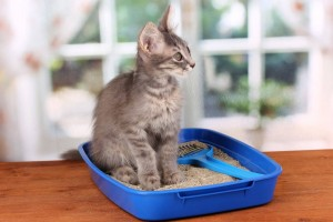The Right Cat Litter