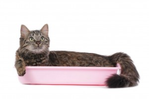 Litter Box Problems With Older Cats