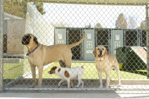 The Right Boarding Kennel