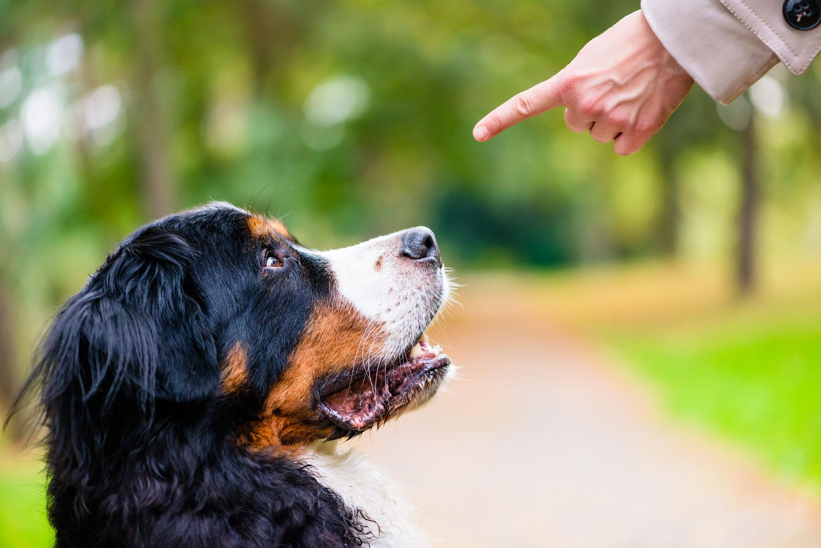 Dog Training Without Treats