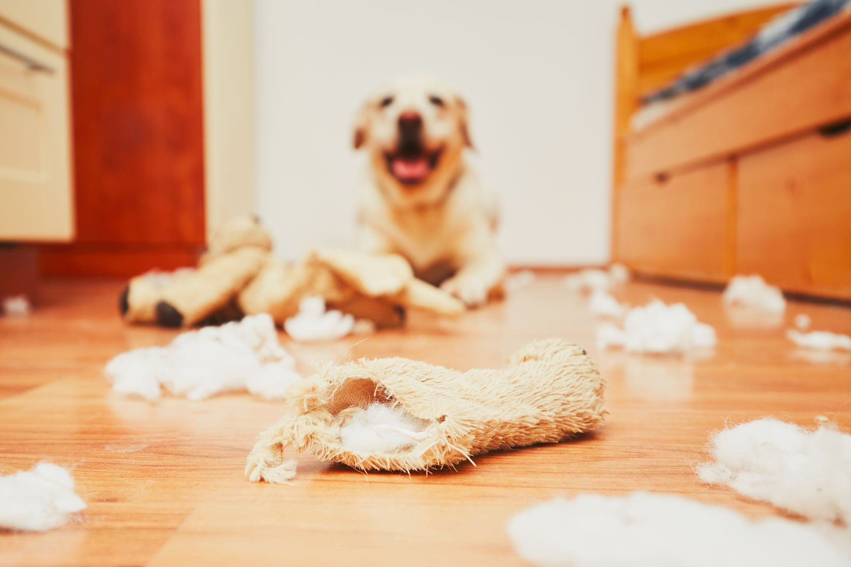 Bad Dog Behaviour