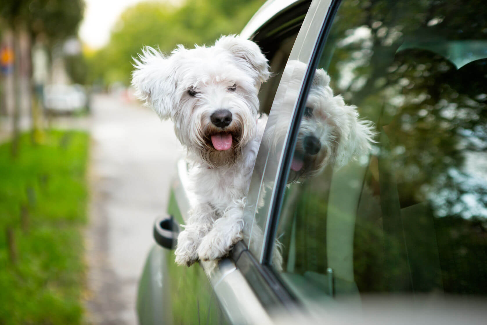 Packing List When Travelling With Your Pet