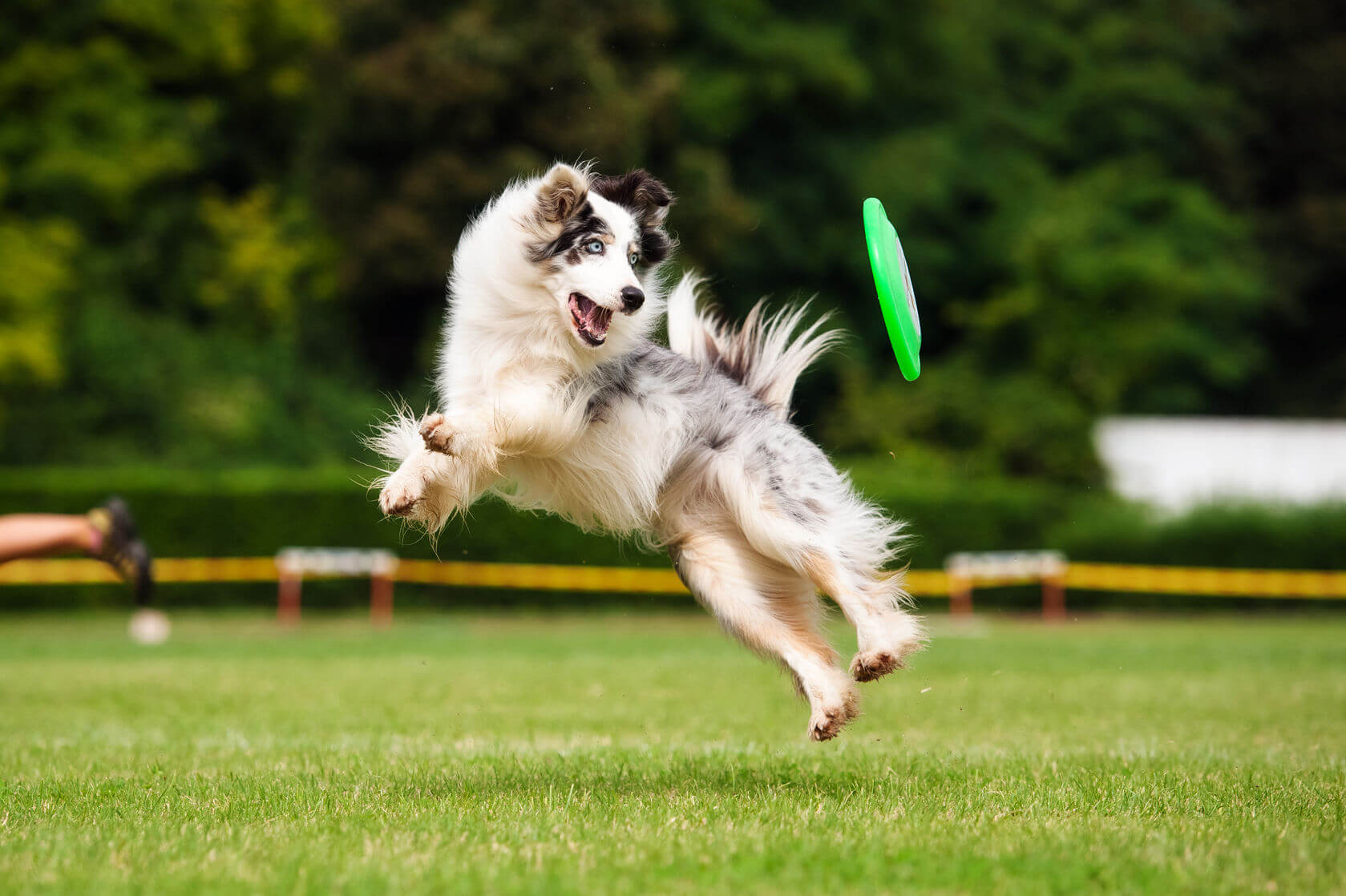 Keeping Your Dog Fit And Healthy