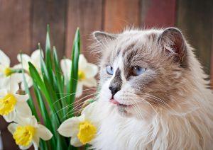 Plants Poisonous To Cats