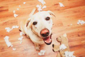Pet Safe From Broken Dog Toys