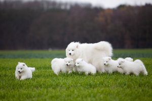 How To Find A Good Dog Breeder