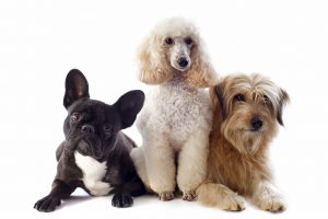 Different Groups Of Dog Breeds