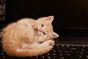Strange Cat Behaviour