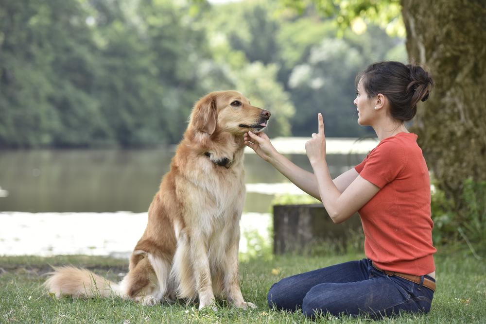 Basic Dog Training Commands