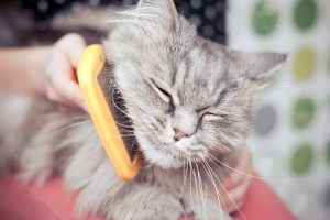 Remedies For Cat Hairballs