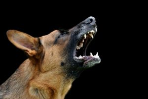 Dealing With Aggressive Dogs