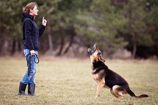 dog boarding training