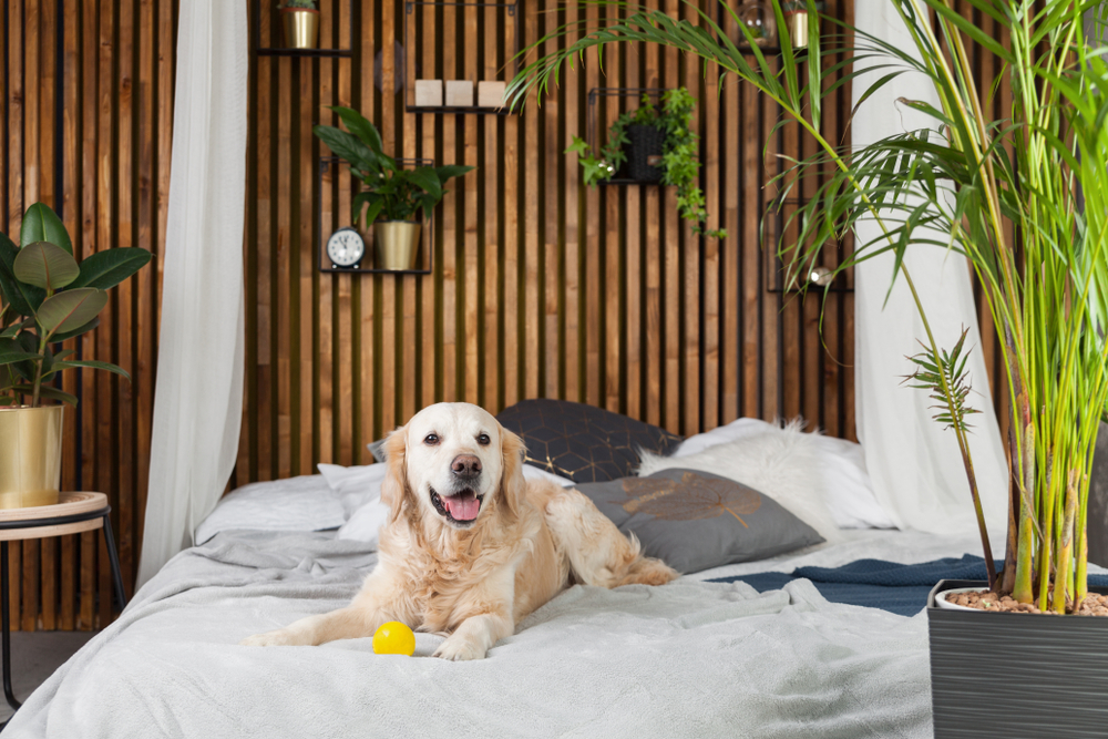Pet owners looking to rent or buy