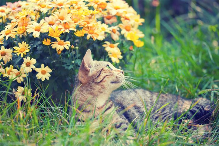 Plants Toxic to Cats