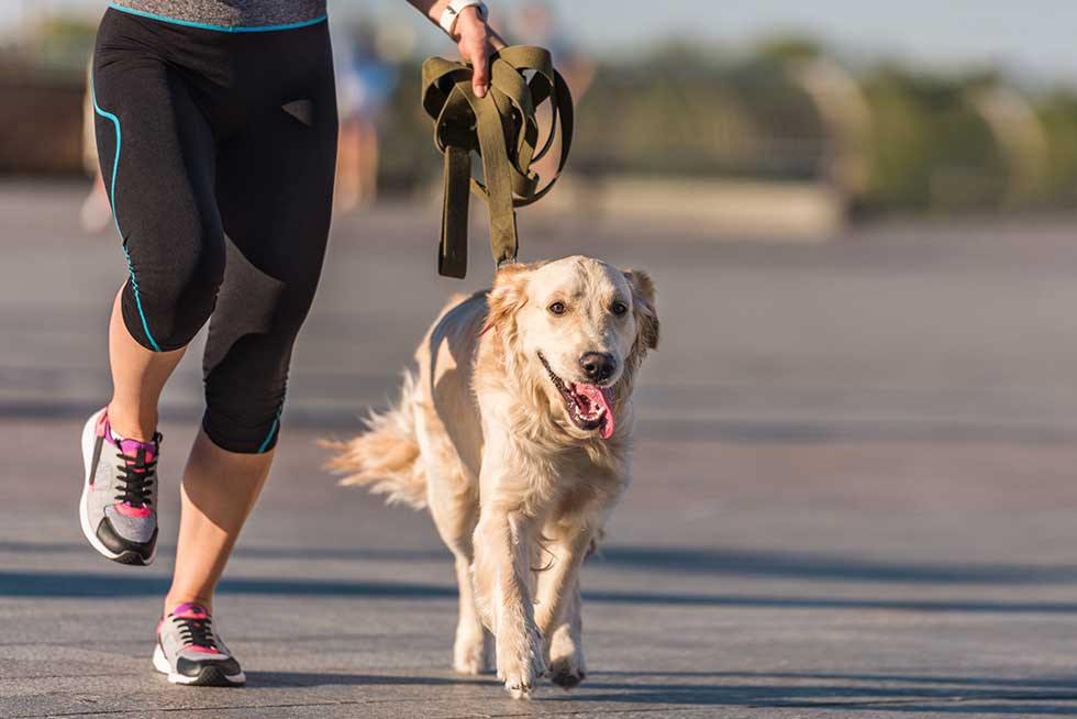 Over-Exercising Dogs